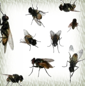 485houseflies