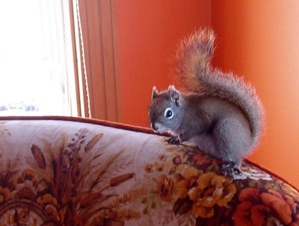 18squirrel