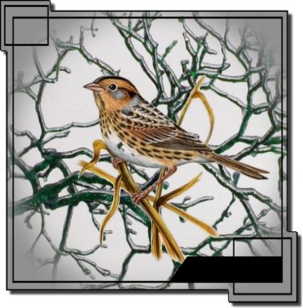 2sparrow