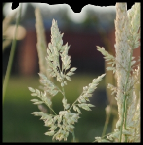 635grass