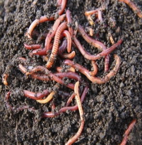 663worms