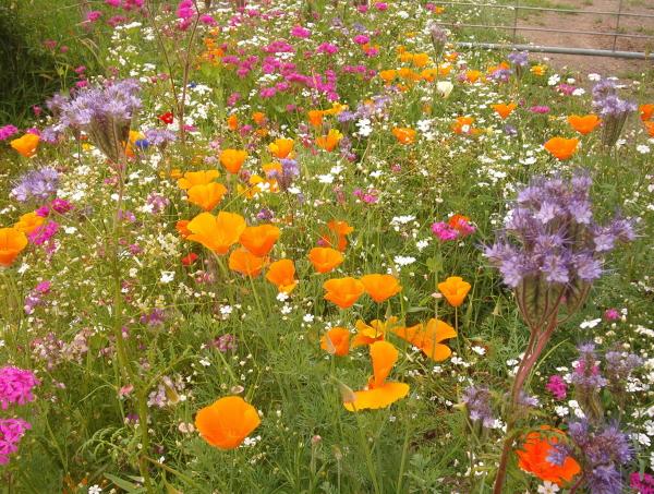 55wildflowers