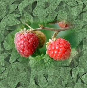 893raspberries