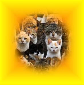 938cats