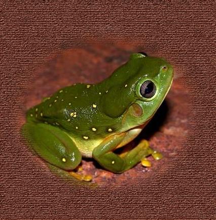 20bfrog